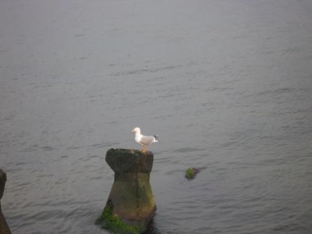 3-mai-2009-simpaticul-pescarus